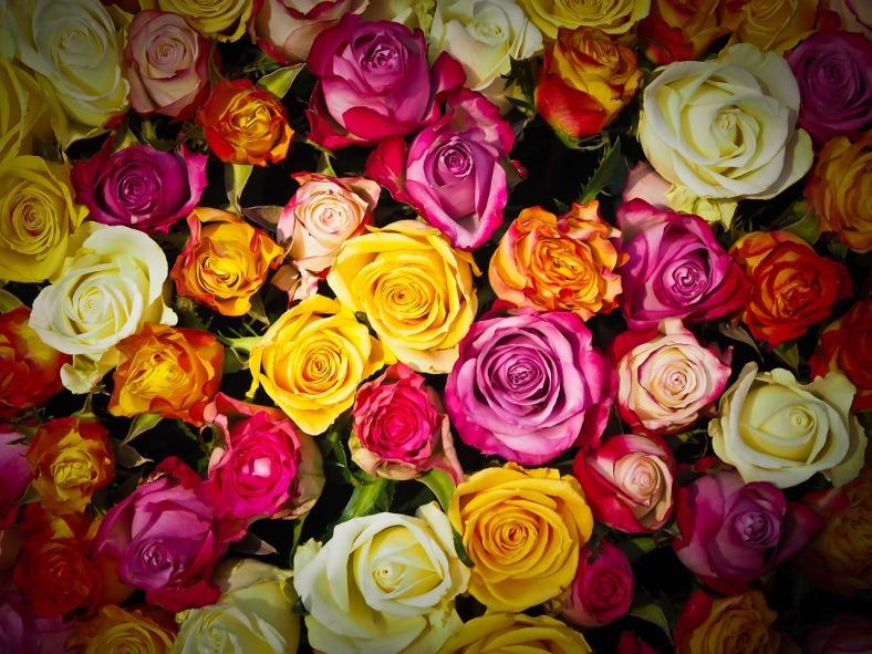 roses-1229148_1280